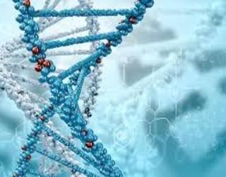 В КИТАЙ ЗАПОЧНА МАСОВО ДА РЕДАКТИРА ДНК НА ХОРА