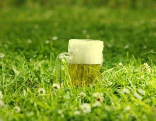 Антиоксидантният ефект на бирата